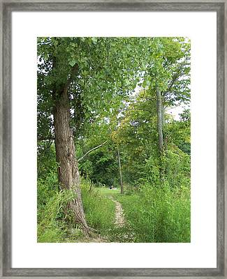 Caesar's Creek Framed Print by Vijay Sharon Govender