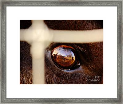 Caged Buffalo Reflects Framed Print by Robert Frederick
