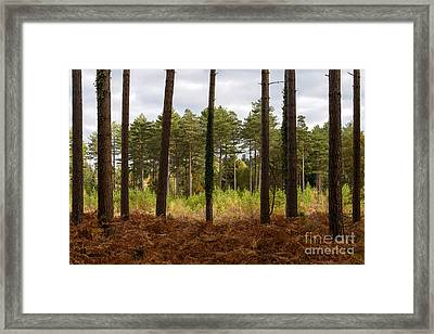 Caged In New Forest Framed Print by Richard Thomas