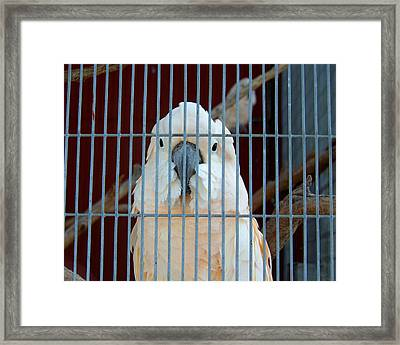 Caged Framed Print by Jai Johnson