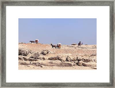 caleshes in Egypt Framed Print by Joana Kruse