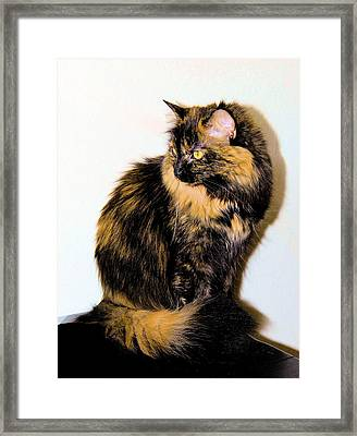 Calico Cats Framed Print by Cheryl Poland