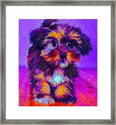 Calico Dog Framed Print by Jane Schnetlage