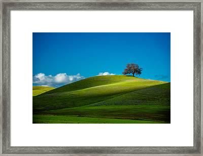 California Black Oak Framed Print by Dan Holmes