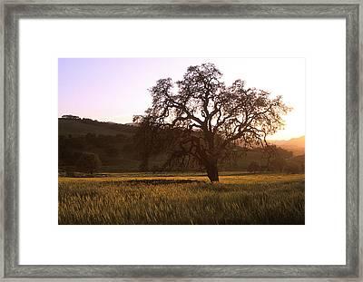 California Hwy 25 Oak Framed Print by Kathy Yates