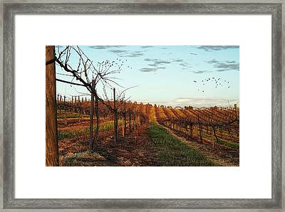 California Vineyard In Winter Framed Print by Glenn McCarthy Art and Photography