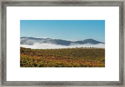California Vineyard Framed Print by Joseph Smith