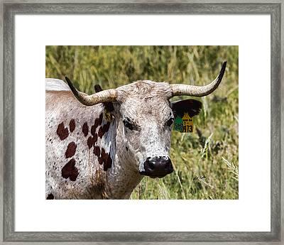 Call Me Spot Framed Print by Bill Kesler