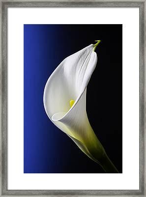 Calla Blue Black Framed Print by Garry Gay