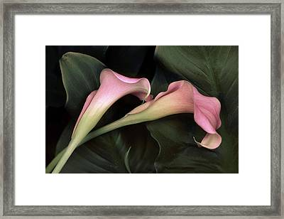 Calla Caress  Framed Print by Jessica Jenney