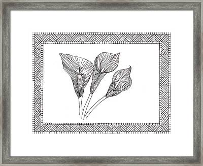 Calla Lilly Framed Print by Sharon White