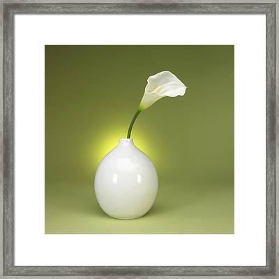 Calla Lily And Vase Framed Print by Tony Ramos