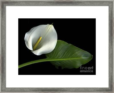 Calla Lily Framed Print by Christian Slanec