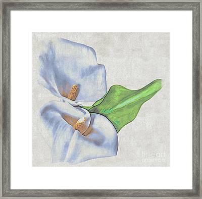 Calla Lily Framed Print by Eleni Mac Synodinos
