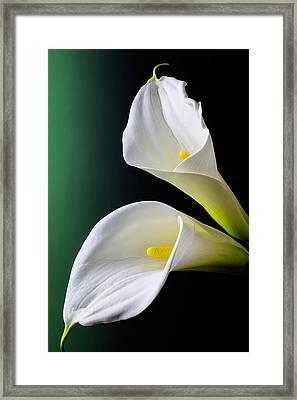 Calla Lily Green Black Framed Print by Garry Gay