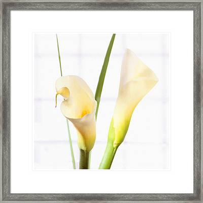 Calla Lily Framed Print by Mike McGlothlen