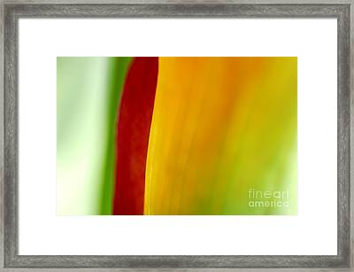 Calla Lily Framed Print by Silke Magino