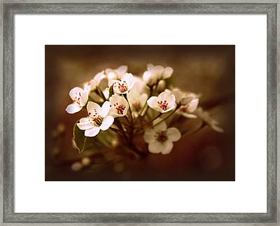 Callery Pear Framed Print by Jessica Jenney