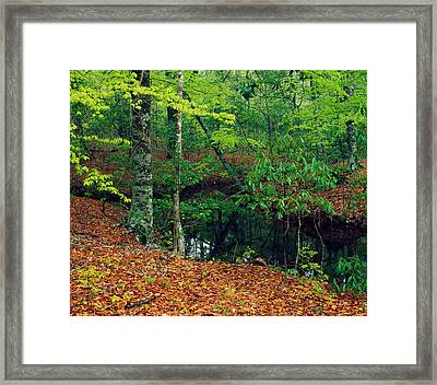 Calm Stream Through Beech And Magnolia Framed Print by Panoramic Images