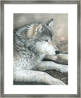 Calm Wolf Framed Print by Carla Kurt