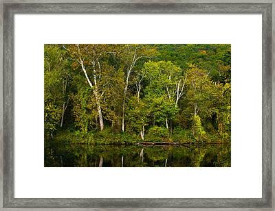 Calming Trees Framed Print by Karol Livote