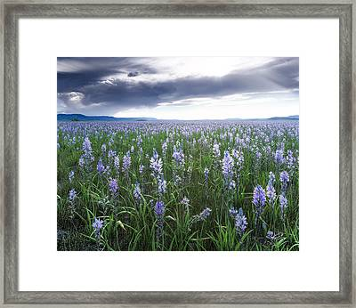 Camas Marsh 2 Framed Print by Leland D Howard