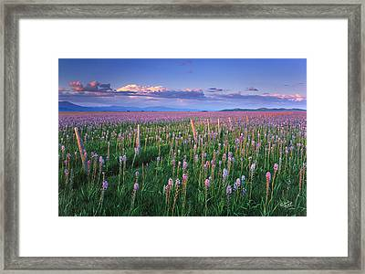 Camas Prairie Framed Print by Leland D Howard