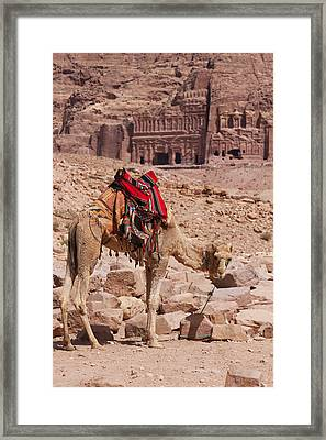 Camel In Front Of The Royal Tombs In Petra Framed Print by Martin Child