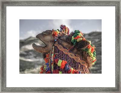 Camel Framed Print by Joana Kruse