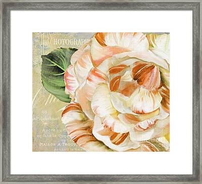 Camellia II Framed Print by Mindy Sommers