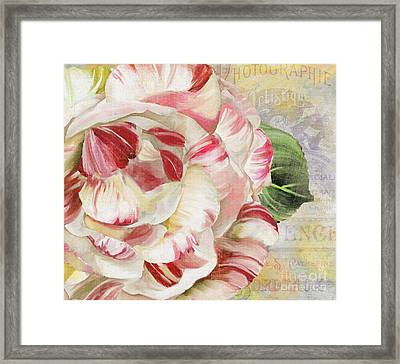 Camellia Framed Print by Mindy Sommers
