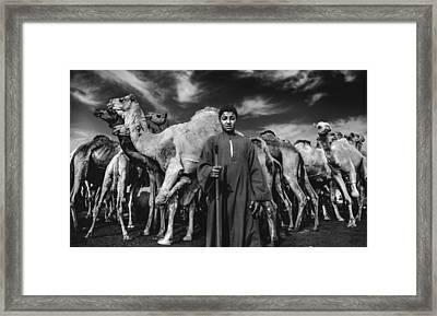 Camels Gaurdian Framed Print by Mohamed Safwat Abonour