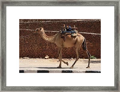 Camels Of Axum Framed Print by Aidan Moran