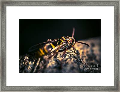 Camouflaged Killer Wasp Framed Print by Jorgo Photography - Wall Art Gallery