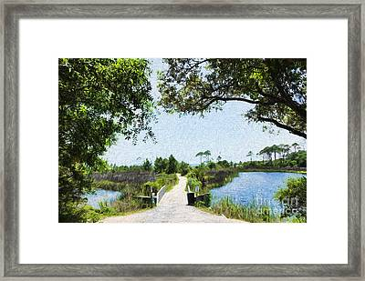 Camp Helen State Park Walkway To The Gulf Of Mexico Framed Print by Vizual Studio