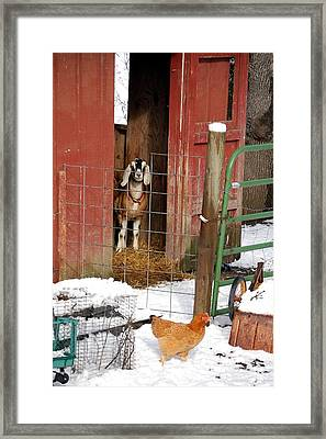 Can I Come Out Yet Framed Print by Laura Mountainspring