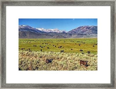 Can I Have Your Attention Please  Framed Print by Donna Kennedy