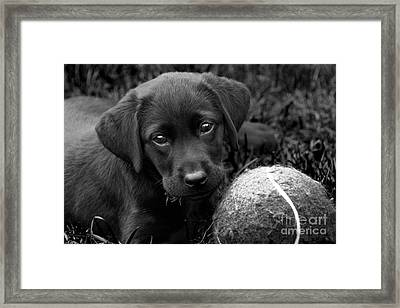 Can We Play  Framed Print by Cathy  Beharriell