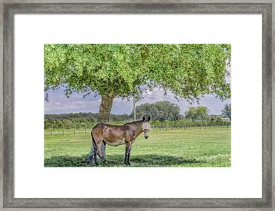 Can You See Me? Framed Print by Louise Hill