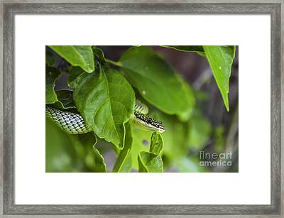 Can You See Me? Framed Print by Michelle Meenawong
