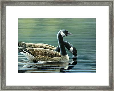 Canada Geese Framed Print by Mark Mittlesteadt