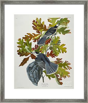 Canada Jay Framed Print by John James Audubon