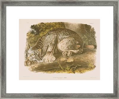 Canada Lynx Framed Print by John James Audubon