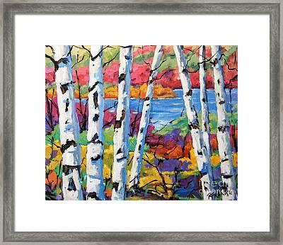 Canadian Birches By Prankearts Framed Print by Richard T Pranke