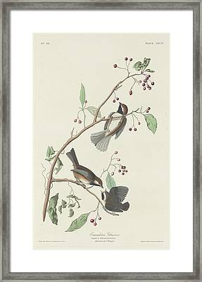 Canadian Titmouse Framed Print by John James Audubon