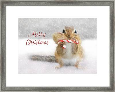 Candy Cane Christmas Framed Print by Lori Deiter