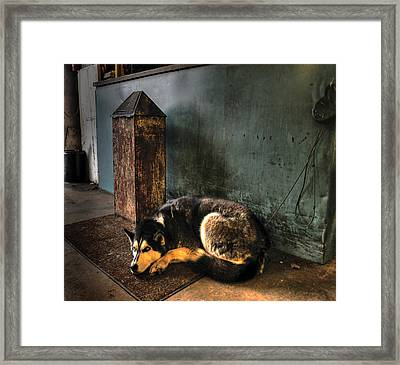 Canine Sentry Framed Print by Don Wolf