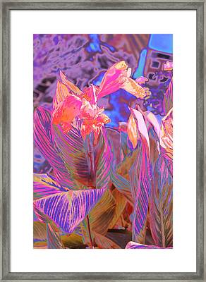 Canna Abstract 9 Framed Print by M Diane Bonaparte