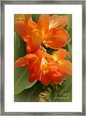 Canna Bloom Framed Print by Linda Covino