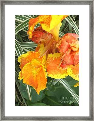 Canna Lilies Framed Print by David Bearden
